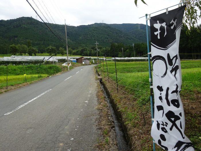 京都 自然